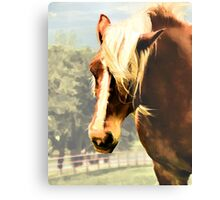 Draft Horse Metal Print