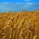 Harbour Reeds by Ciaran O'Hagan