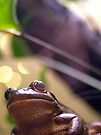 local fauna a frog's-eye view by dennis william gaylor
