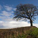 Lone tree on the edge of Dartmoor by peteton