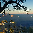 USA. Arizona. Grand Canyon. (Alan Copson ©) by Alan Copson