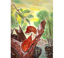 Weasel in tree Photographic Print