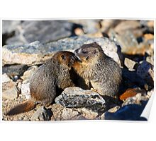 Marmot Babies Keeping Secrets Poster