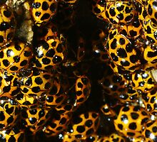 Standing Room only at this years Annual LadyBird Convention by Biggzie