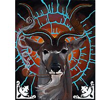 Bruth the Spiral Horned Kudu Photographic Print