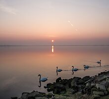Five Swans at Dawn by Martina Fagan
