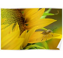 Sunflower and the Insect Poster