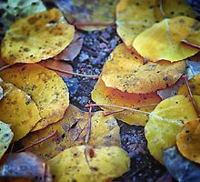 Carpet of Gold by Brian Kerls  photography