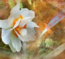 Sweet Momento by Nadya Johnson