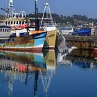 A Gull Flew By........... by lynn carter