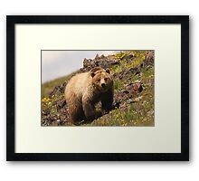 Grizzly & Wildflowers Framed Print