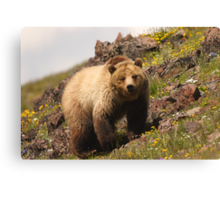 Grizzly & Wildflowers Canvas Print