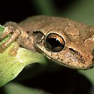 Tree Frog Portrait by William C. Gladish, World Design