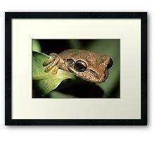 Tree Frog Portrait Framed Print