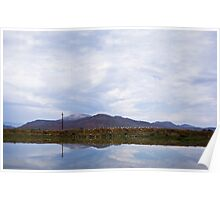 Gathering of Cattle Egrets - Reflected - Wide Angle Poster