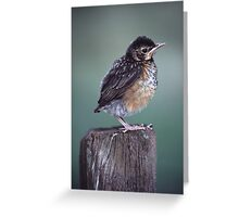 Baby Robin Portrait Greeting Card