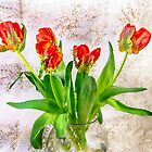 HDR French Red Tulips  by daphsam