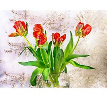 HDR French Red Tulips  Photographic Print