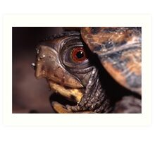 Turtle Portrait Art Print