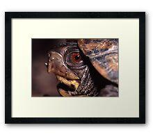 Turtle Portrait Framed Print