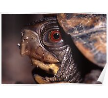 Turtle Portrait Poster
