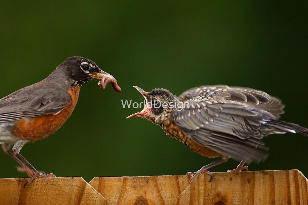 Robin Getting Fed by William C. Gladish