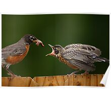Robin Getting Fed Poster