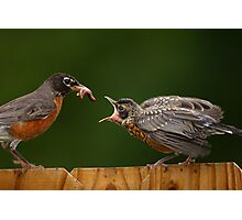 Robin Getting Fed Photographic Print