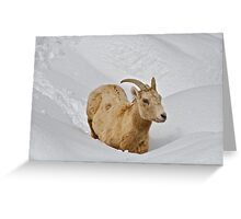 Surprise Spring Snowstorm Greeting Card