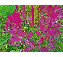 Pink Ground Cover Photographic Print