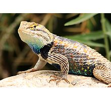 Reptile Beauty Photographic Print