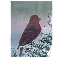 Red Grosbeak in acrylic Poster
