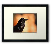 Raven Portrait at Sunset Framed Print