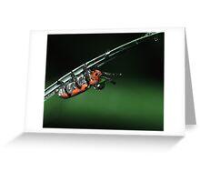Milkweed Beetle & Dew Drop Greeting Card
