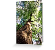Old-Growth Beech Tree Greeting Card