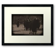 Buffalo Dust  Framed Print