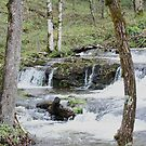 Little Mountain Stream by Lori Walton