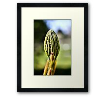 What's up Bud? Framed Print
