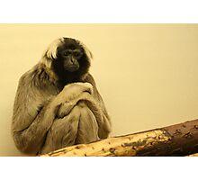 Gibbon Monkey Photographic Print