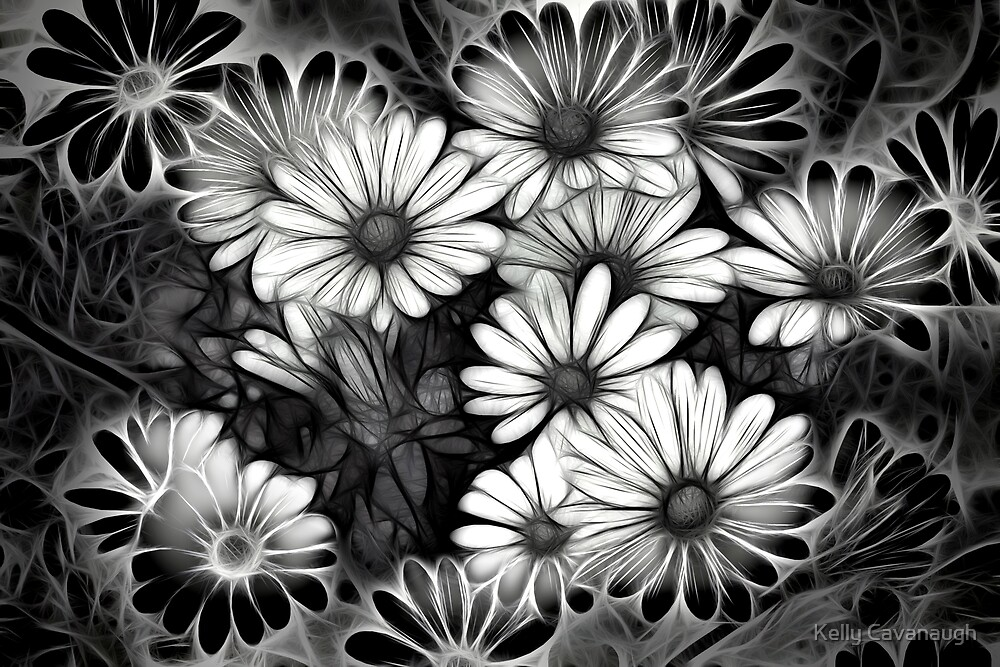 African Daisies by Kelly Cavanaugh