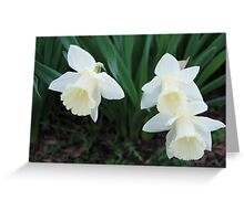Three White Daffodils Greeting Card