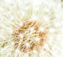 Elegant White Dandelion Florets  by IrisRichardson