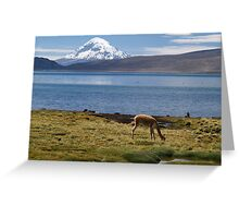 Volcán Pomerape - Chile Greeting Card