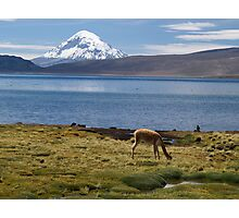 Volcán Pomerape - Chile Photographic Print