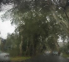 Through The Wet Windscreen by antsp35
