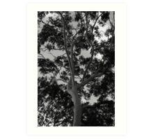 Tall Timbers Art Print