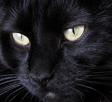 Feline Charisma by DianneLac