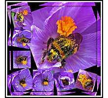The Messiest Bee You Ever Did See! Photographic Print