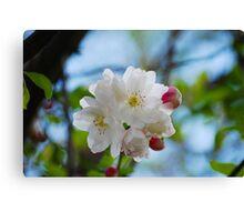 Flowering Tree... Canvas Print