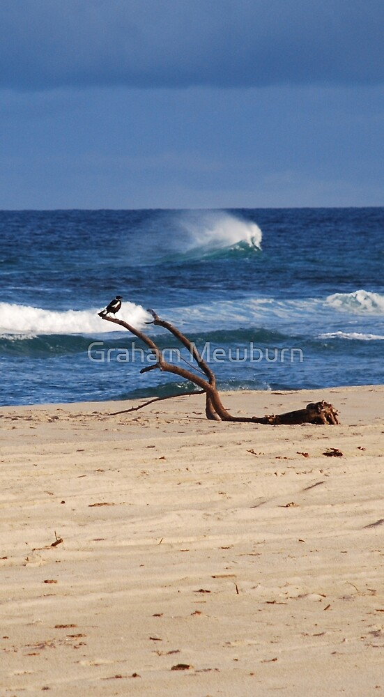 Bird on a Seaside Branch by Graham Mewburn
